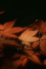 20090516dsc03659_2