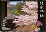 20110326_sake2011sakura3